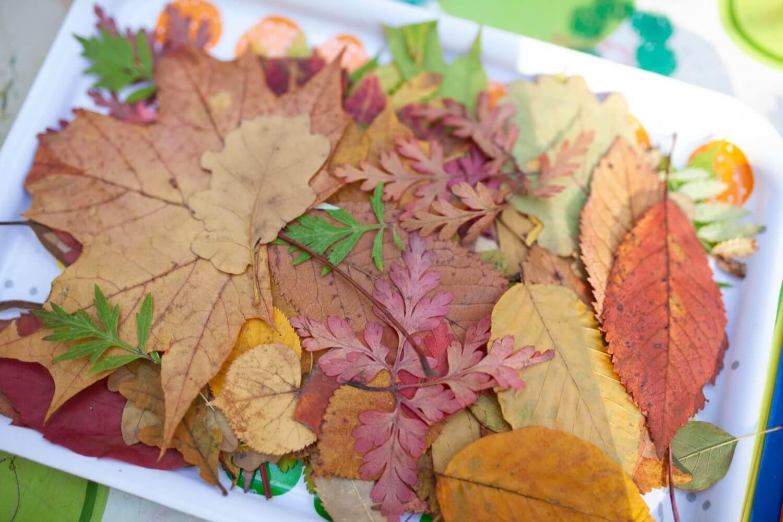 Blätter Sammeln in der Waldgruppe